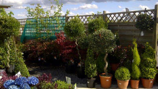 Olivers Plants