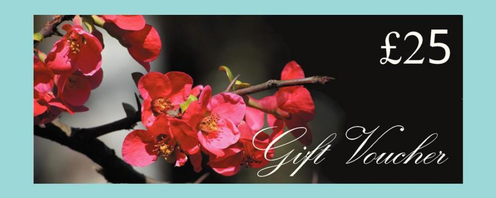 Gift Vouchers UK  – A directory website