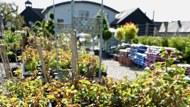 The Plant Centre